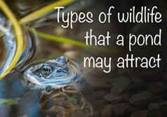 5 types of wildlife that a garden pond may attract