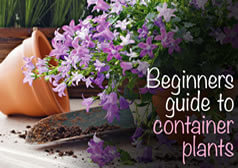 A beginner's guide to container plants