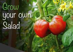 Grow Your Own Salad Selection