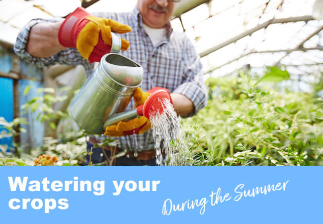 Top 8 Tips for Watering Your Adorable Crops during the Summer Months